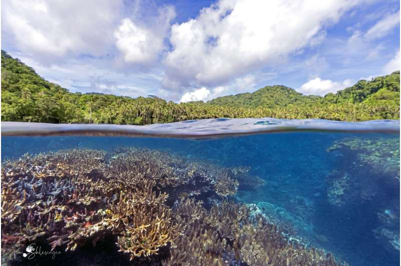 Managing global climate change--and local conditions--key to coral reefs' survival