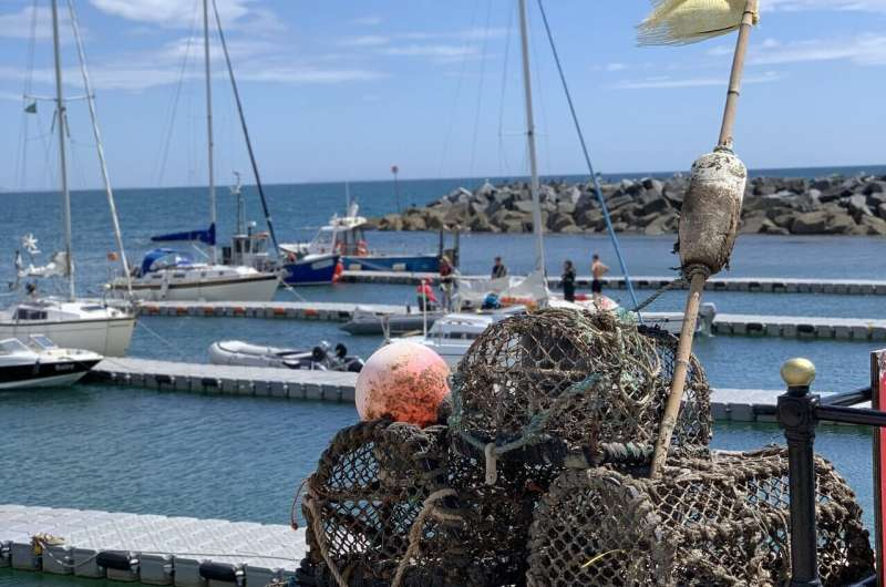Managing crab and lobster catches could offer long-term benefits
