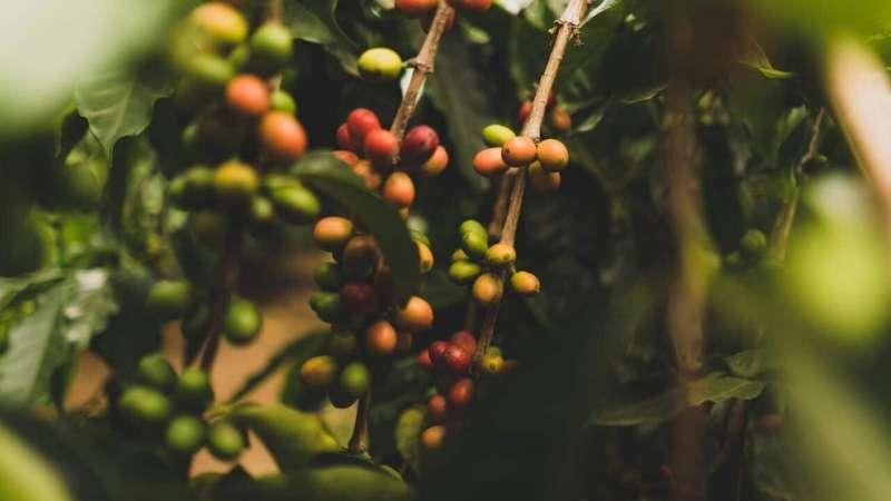 Muchas empresas y organizaciones sin fines de lucro informan que utilizan especies comerciales en proyectos de plantación de árboles