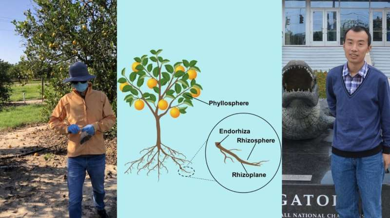 Mapping citrus microbiomes: The first step to finding plant-microbiome treasures