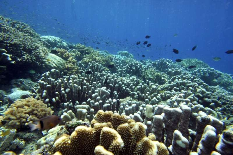 Marine life in tropical waters declines when annual average sea temperature rises above 20 to 25 degrees Celsius