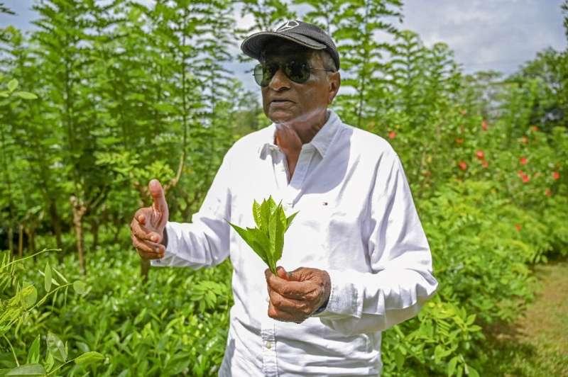 El maestro fabricante de té Herman Gunaratne advirtió que la cosecha anual de té de Sri Lanka podría reducirse a la mitad a menos que el gobierno reconsidere su