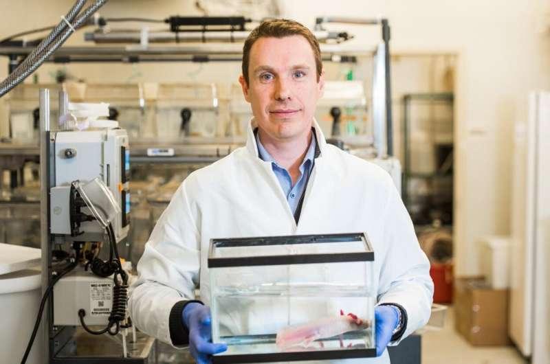 MDI Biological Laboratory scientist identifies signaling underlying regeneration