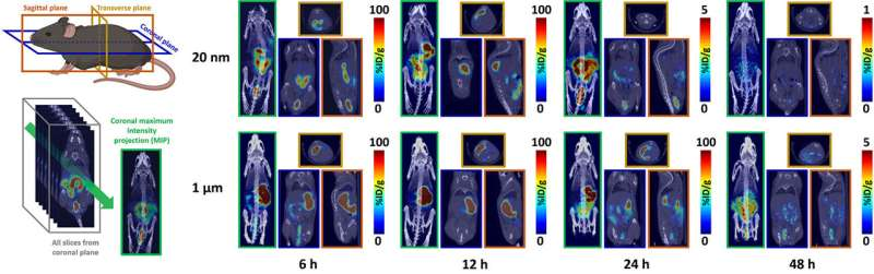Measuring the elimination of plastic particles from the body in mice