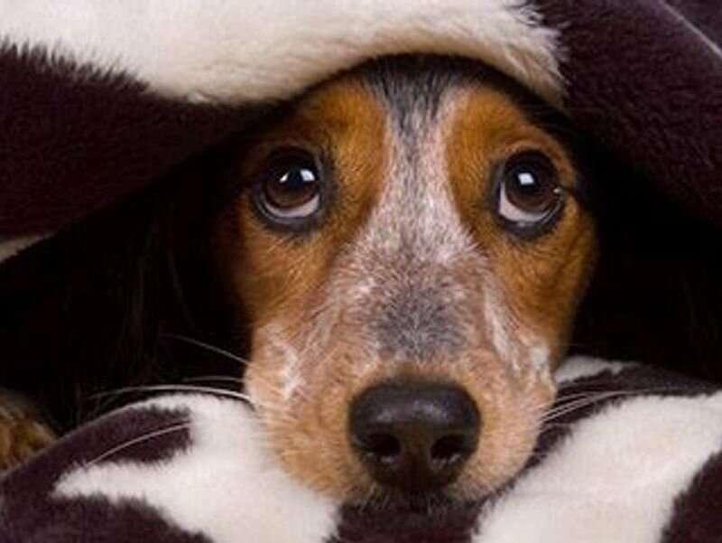 Errores de medicación en mascotas: cómo reducir el riesgo