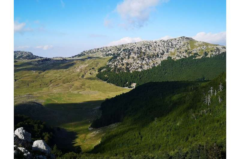Mediterranean old-growth forests exhibit resistance to climate warming