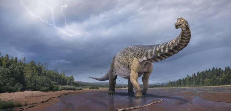 Meet Australia's largest dinosaur – Australotitan, the southern titan