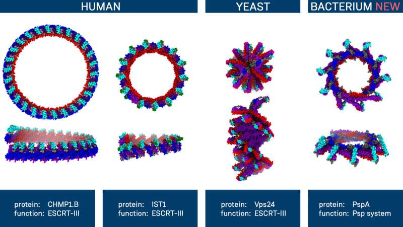 Membrane proteins of bacteria and humans show surprising similarities