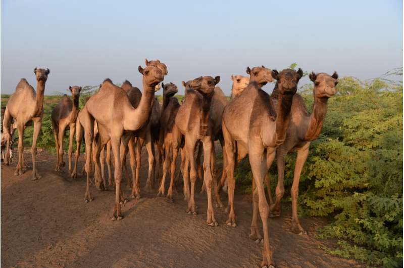 MERS-CoV just a few mutations away from becoming a pandemic threat