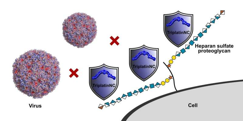 Metal-based compounds pave the way for new antiviral treatments