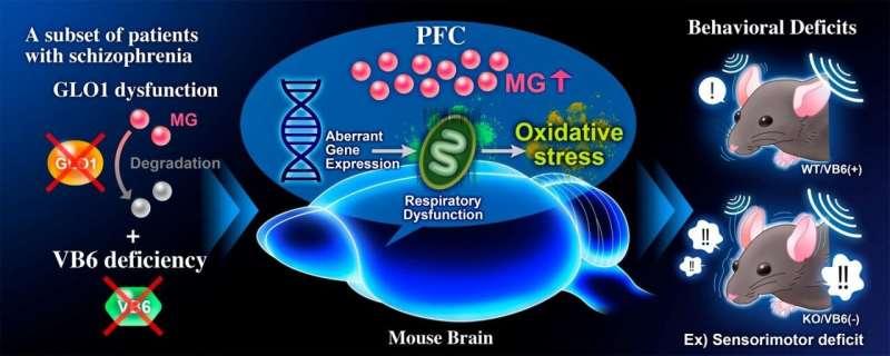 Methylglyoxal detoxification deficits causes schizophrenia-like behavioral abnormalities