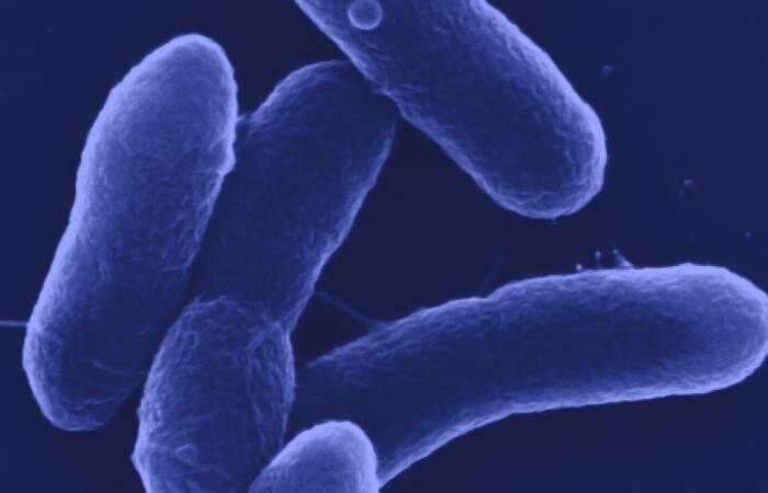 Microbes – Carbon to chemicals