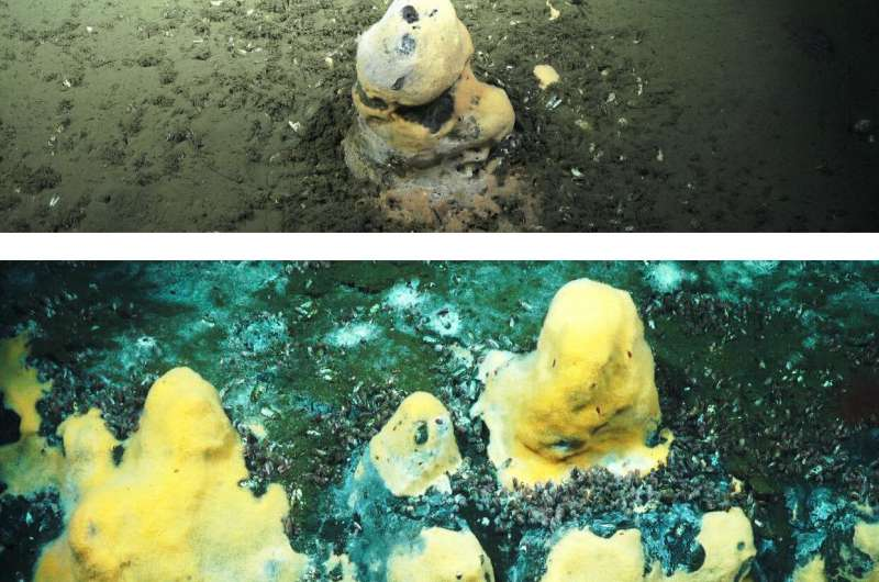 Microbes in ocean play important role in moderating Earth's temperature