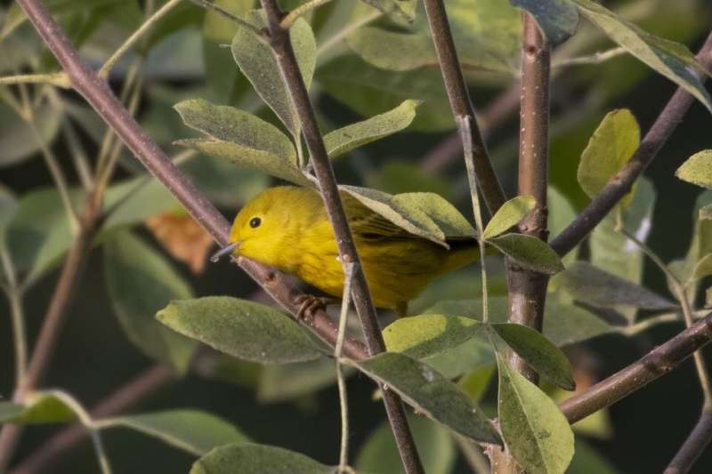 Migratory birds track climate across the year