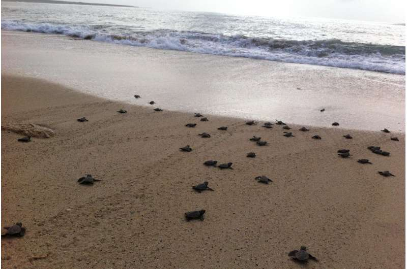 Mitigating the impact of climate change on sea turtle hatchling sex ratios does not have to cost the earth