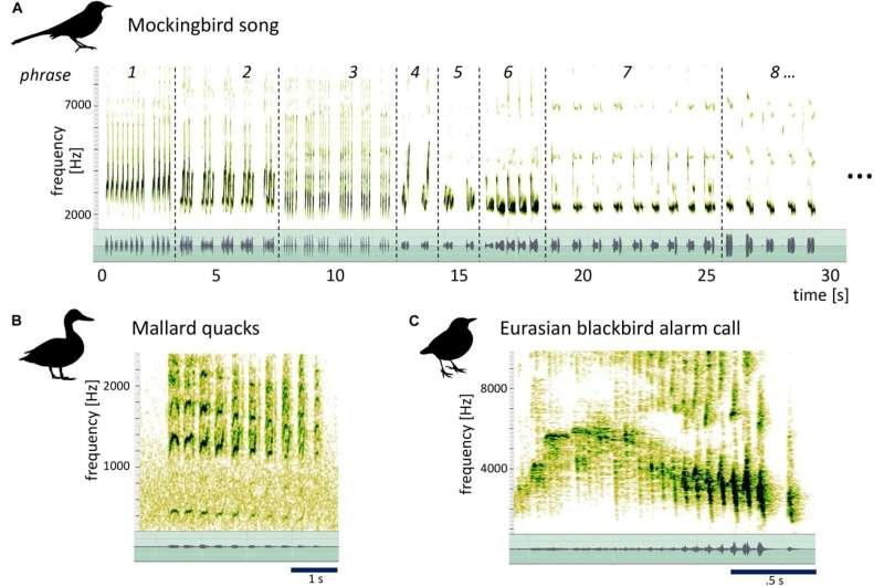 Mockingbird song decoded