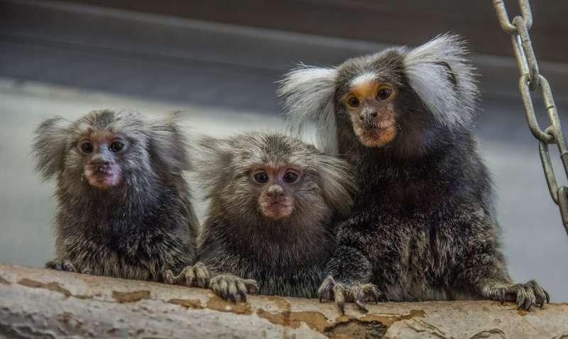 Monkeys also learn to communicate