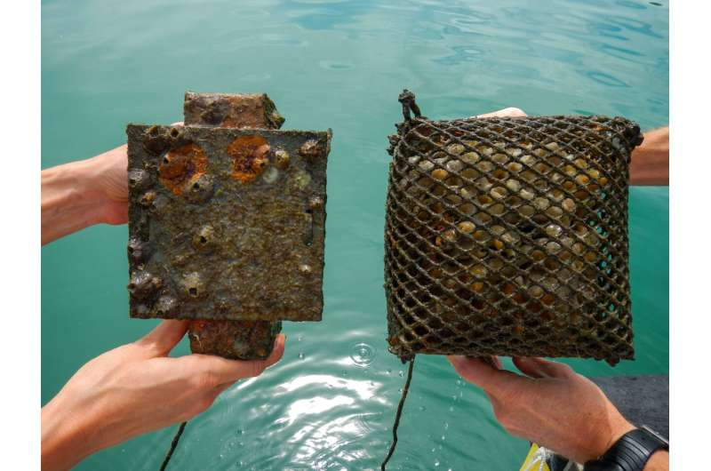 More intense predation in the tropics can limit marine invasions