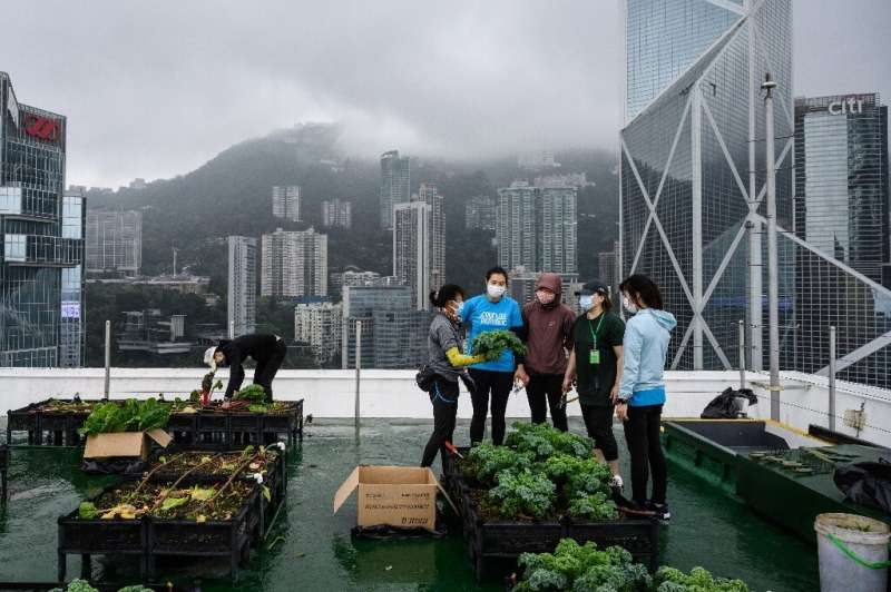 More than 60 urban farms have sprouted across space-starved Hong Kong since 2015—on decommissioned helipads, shopping mall rooft