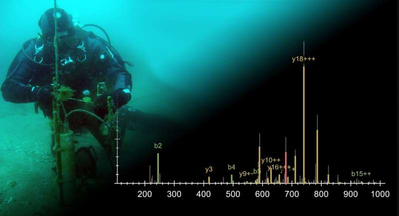 More than just a sun tan: Ultraviolet light helps marine animals to tell the time of year