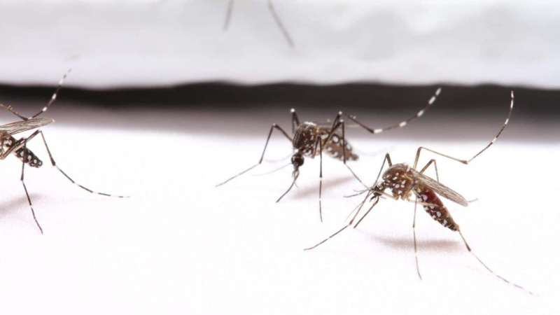 Mosquito-resistant clothing prevents bites in trials