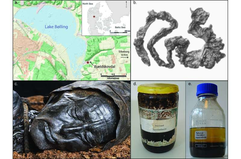 Most detailed study to date of gut contents of Tollund Man