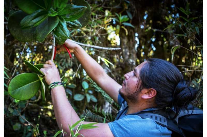 Mountain high: Andean forests have high potential to store carbon under climate change