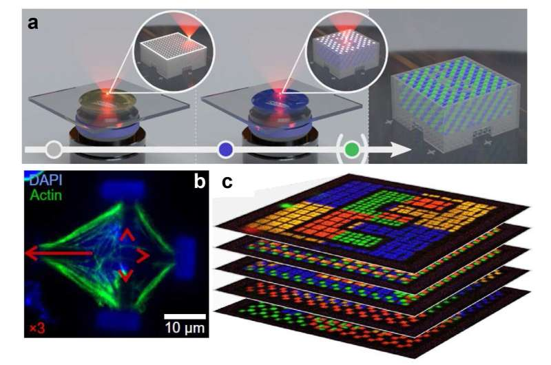 Multi-material multi-photon 3D laser micro- and nanoprinting