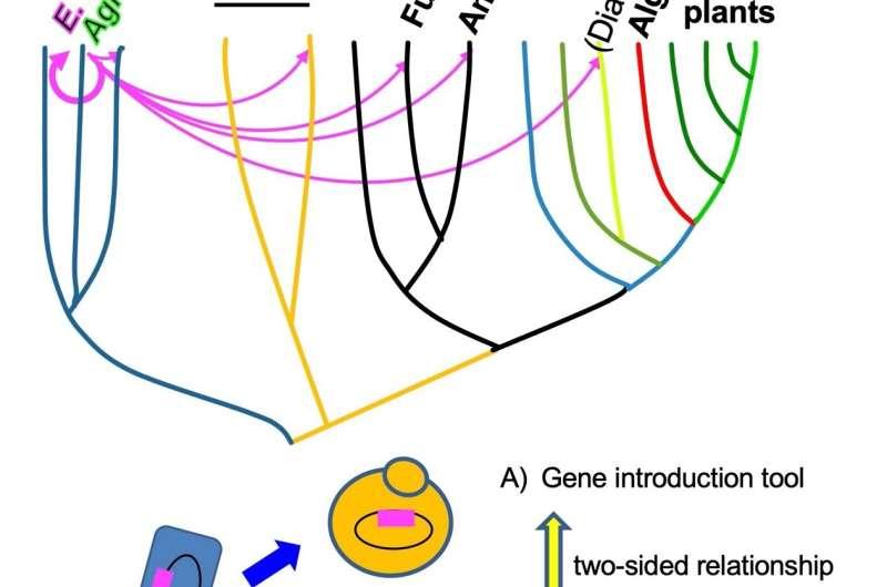 Mutant genes can promote genetic transfer across taxonomic kingdoms