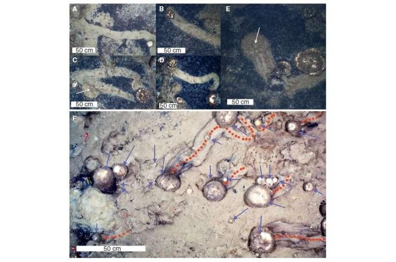 Mysterious ocean-floor trails show Arctic sponges on the move