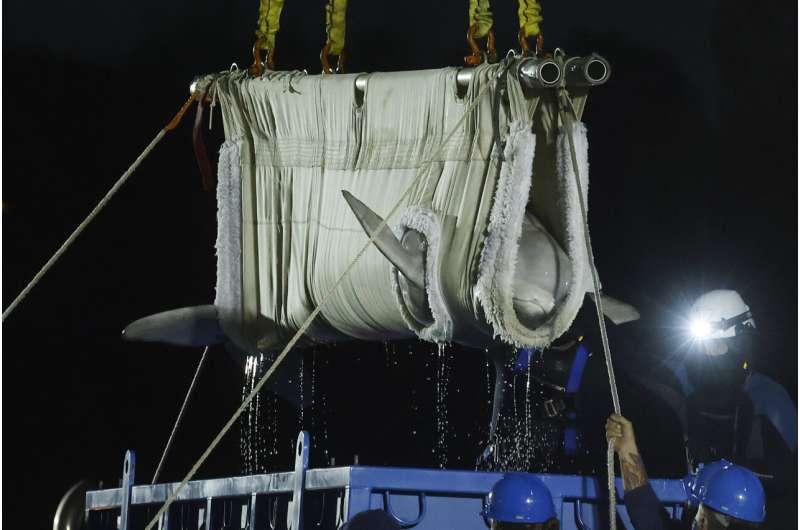 Mystic Aquarium requests to resume research; whale improving