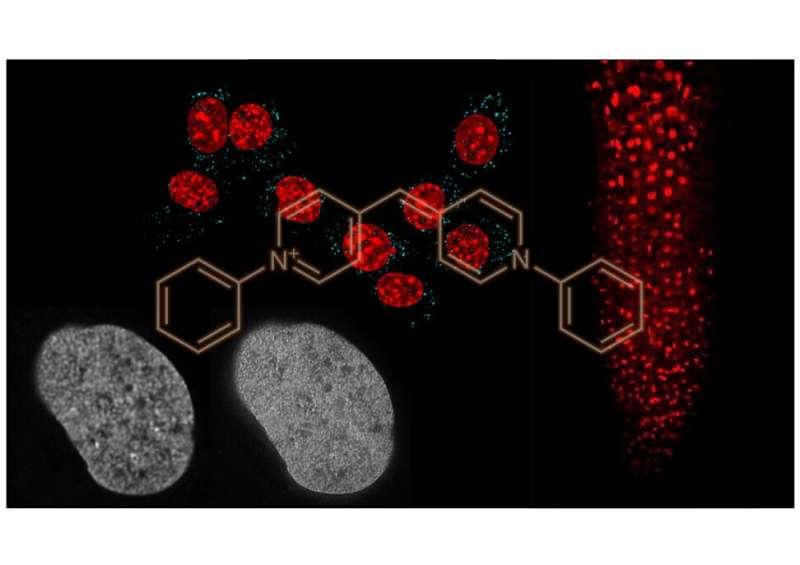 Nagoya University scientists reveal unprecedentedly versatile new DNA staining probe
