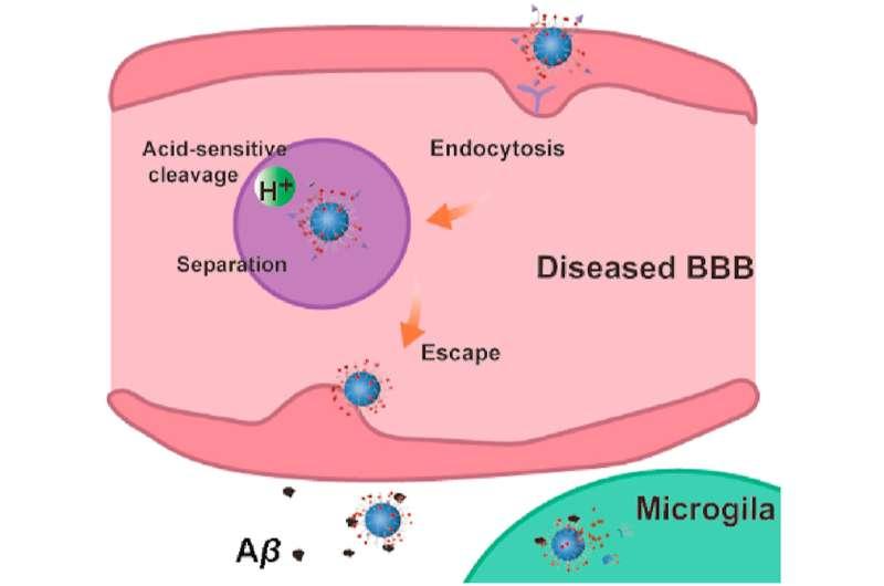 Nanocleaners in Alzheimer's disease