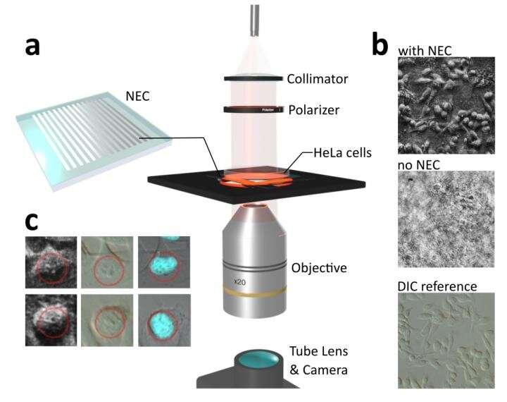 Nanophotonics enhanced coverslip for phase imaging in biology