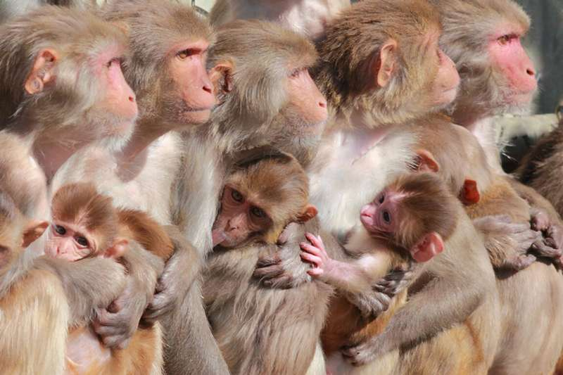Natural exposure to wildfire smoke increased pregnancy loss in rhesus macaques