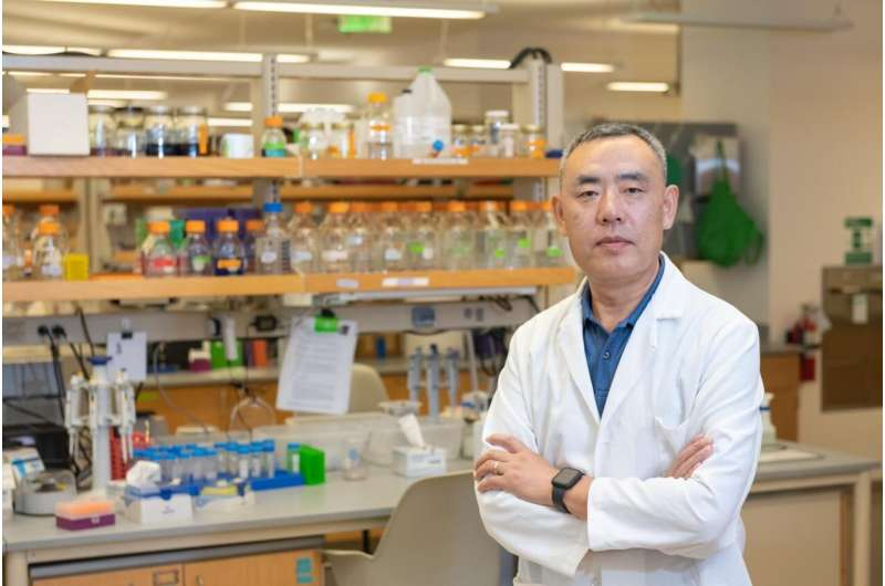 Natural killers: Using the body's cells to target breast cancer