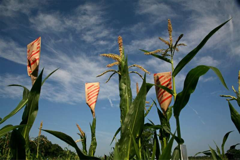 Navigating the corn maze: A technique to map out 'light switches' of maize genome