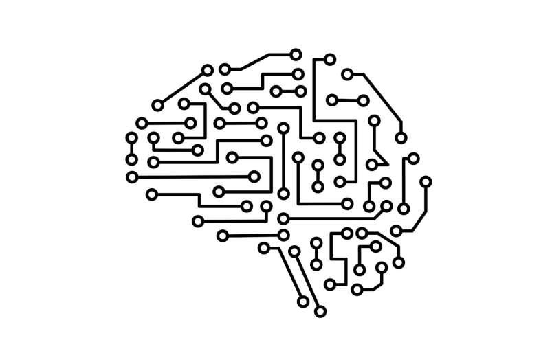 Neural circuits