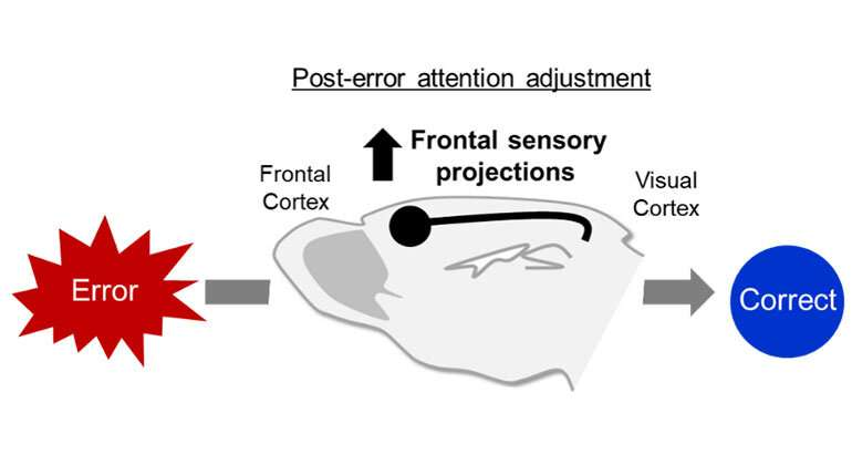 Neural pathway critical to correcting behavioral errors related to psych disorders found