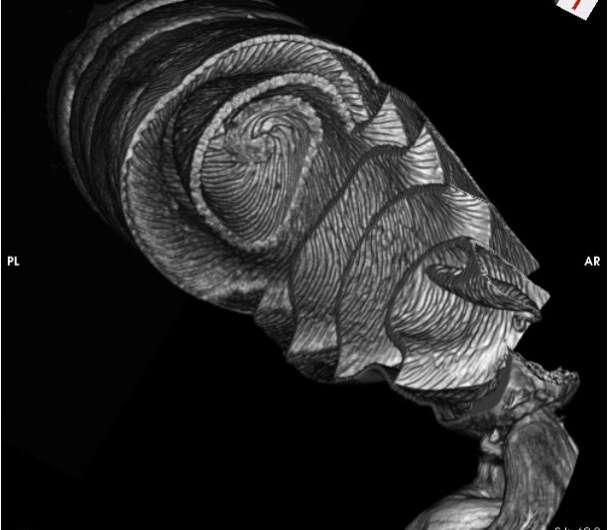 Nuevas imágenes 3D de intestinos de tiburón muestran que funcionan como la válvula de Nikola Tesla