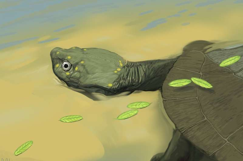 New 96 million-year-old fossil represents oldest side-necked turtle in north america