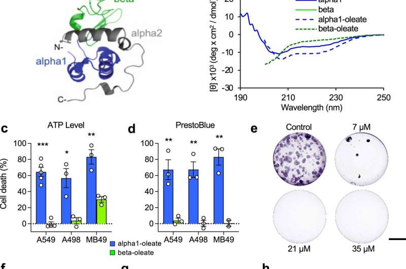 New approach to molecular drug design yields highly promising bladder cancer drug candidate