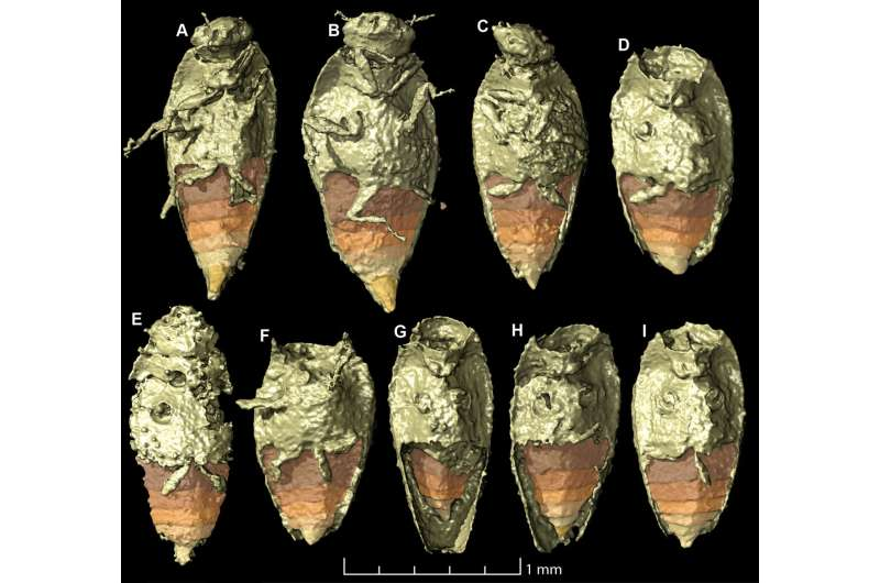 New beetle found in fossil feces attributed to dinosaur ancestor