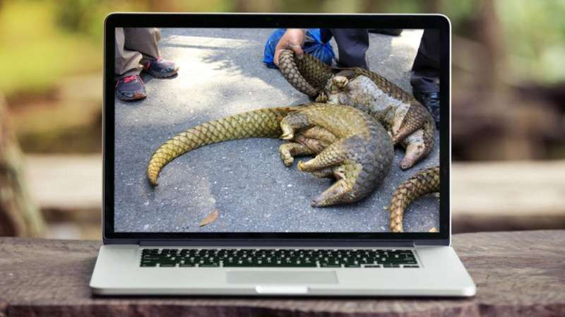 New digital tools to track illegal wildlife trade online