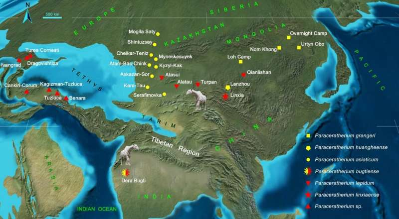 New discovery shows Tibet as crossroads for giant rhino dispersal