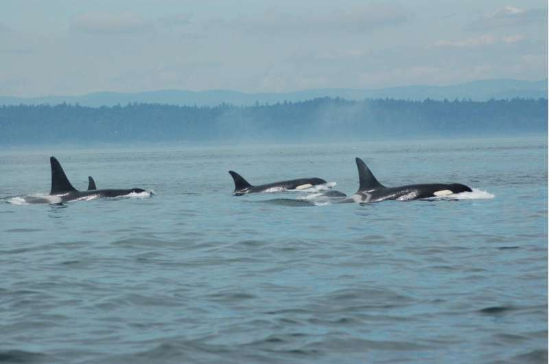 New evidence of menopause in killer whales