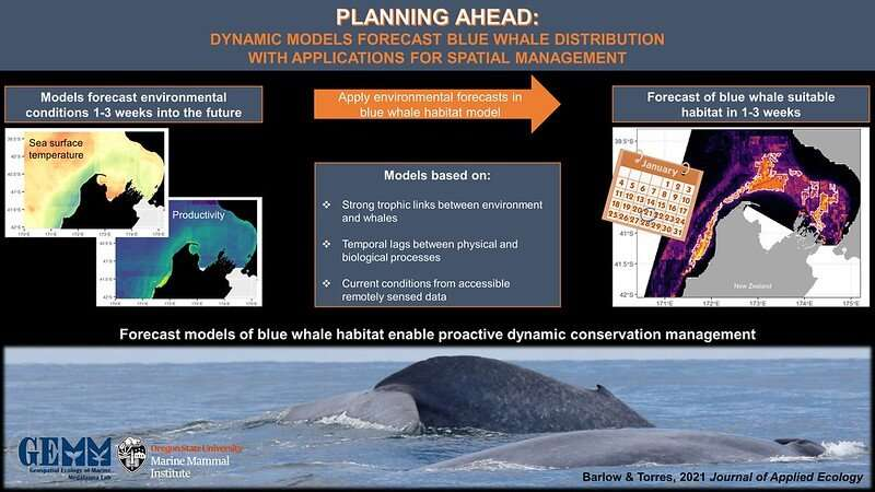 New forecasting tool enables proactive conservation of New Zealand blue whales