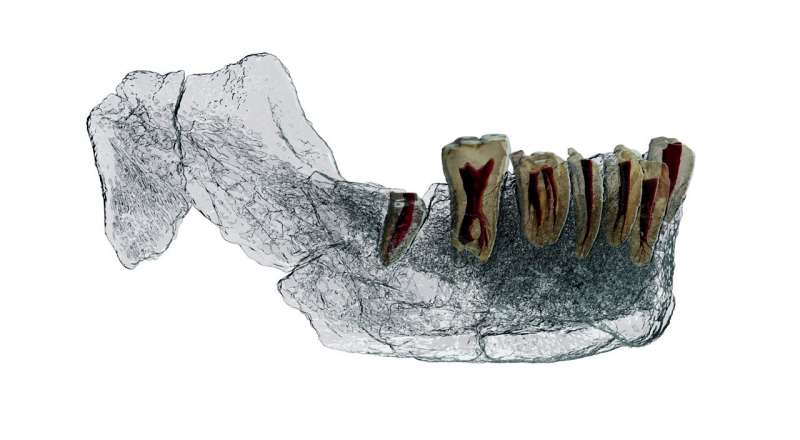 New fossil discovery from Israel points to complicated evolutionary process