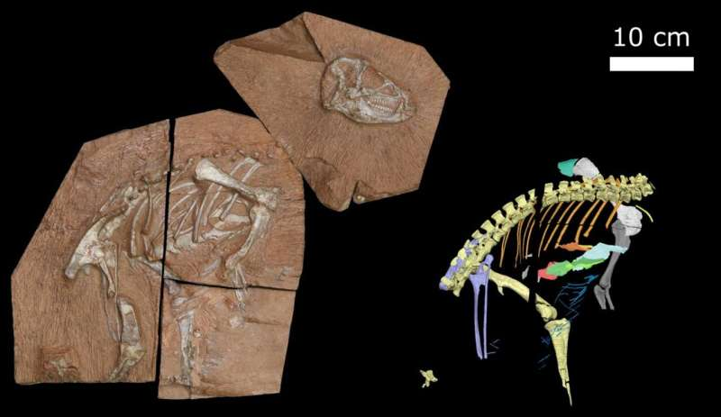 New fossil sheds light on the evolution of how dinosaurs breathed
