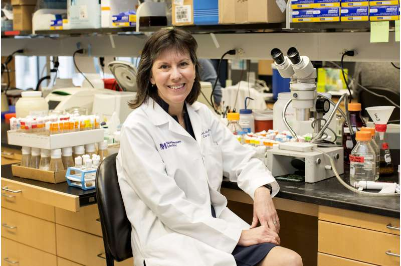 New hope for antibody to treat muscular dystrophy